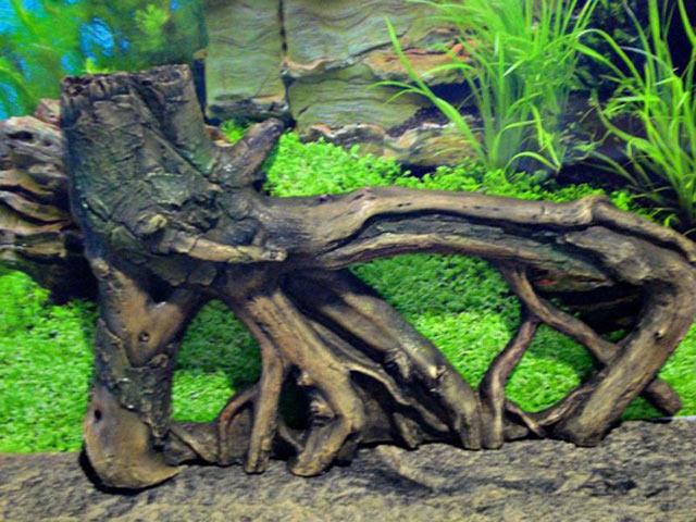 Имитируем сказочные подводные деревья