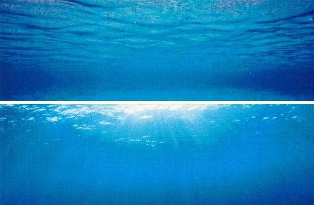 Вариант фона для аквариума