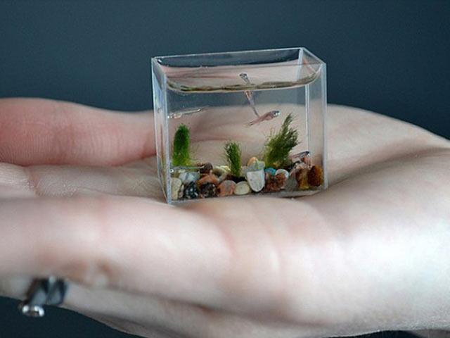 Оборудование в аквариум своими руками