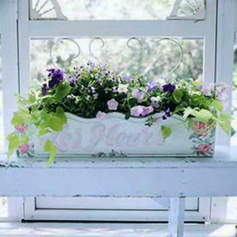 Вазони на вікні