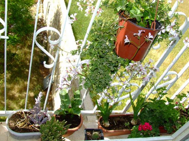 Сад на вікні