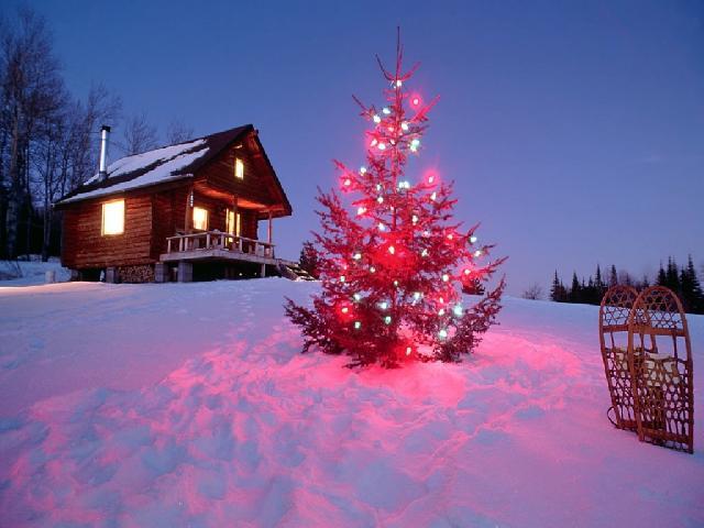 Дизайн новорічної ялинки біля будинку
