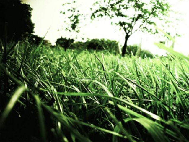 Над водою трава завжди найкрасивіша і густа