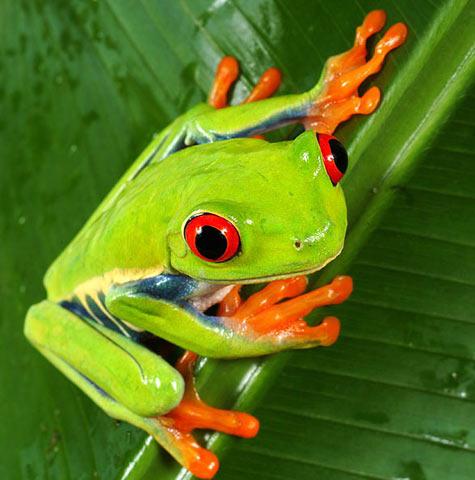 Дерево-жаба