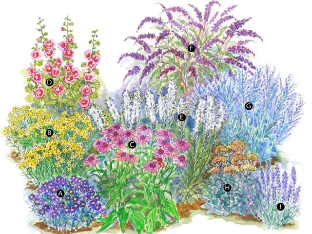 Желаемые растения