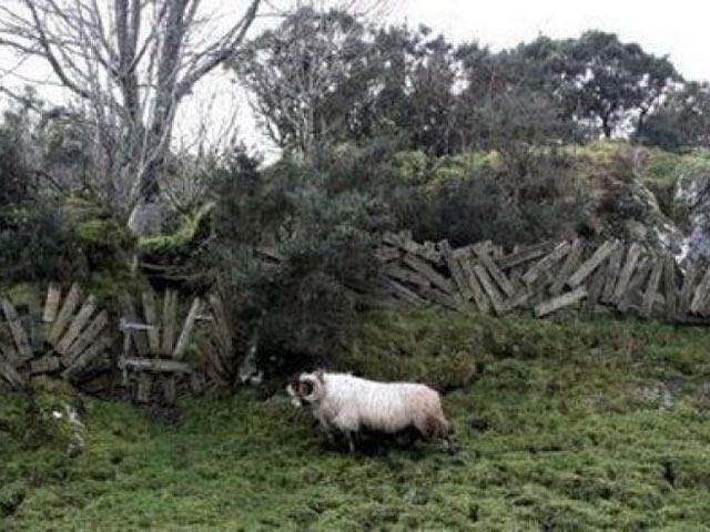 Забор для овец