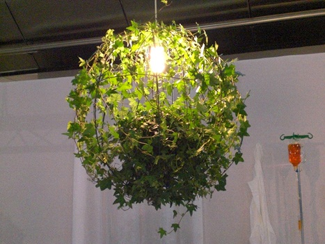Люстра с живым растением