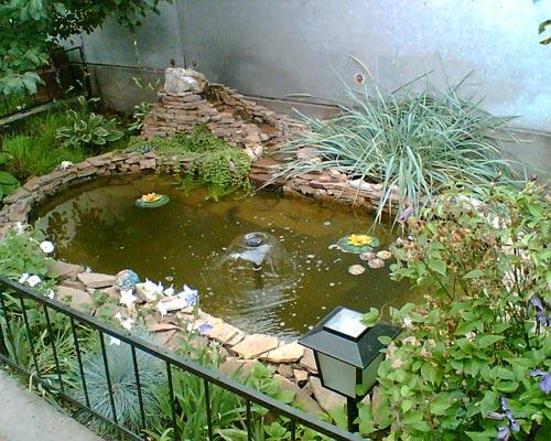 Чим менше водоймище, тим складніше підтримувати в ньому біологічну рівновагу