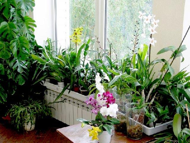 Компоновка растений в зимнем саду