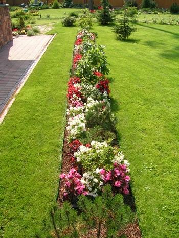Миксбордер.  Комбинирование разнообразных растений в миксбордере позволяет создать живописный вид с нескольких сторон...
