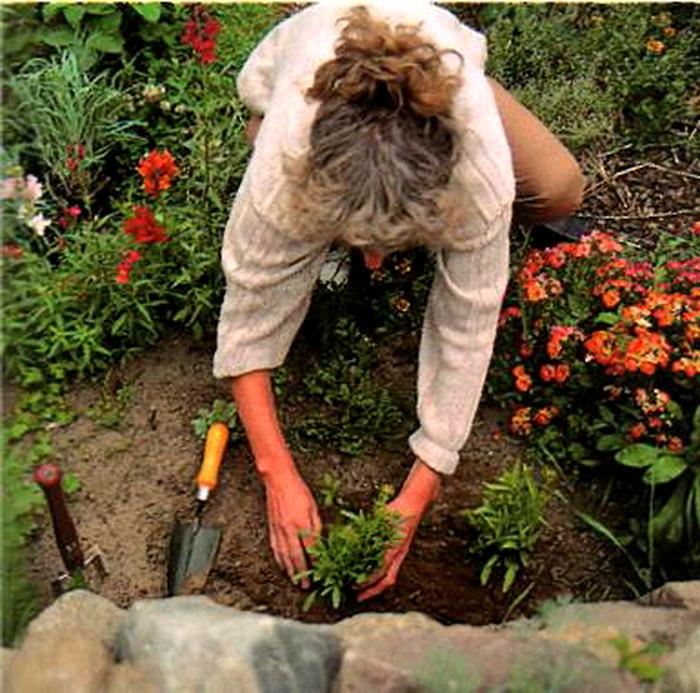 Какие цветы нужно сажать только осенью 539