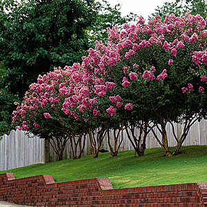 Поддерживающая подрезка цветущих растений