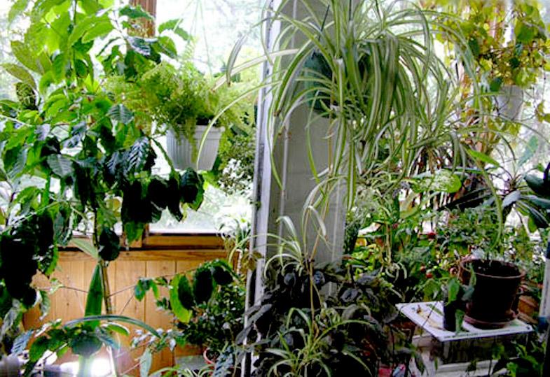Зимний сад на балконе требует правильного подбора растений