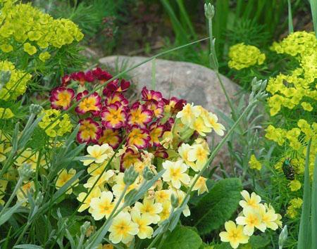 Цветы альпийской горки