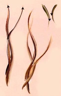 Рисование витых стеблей
