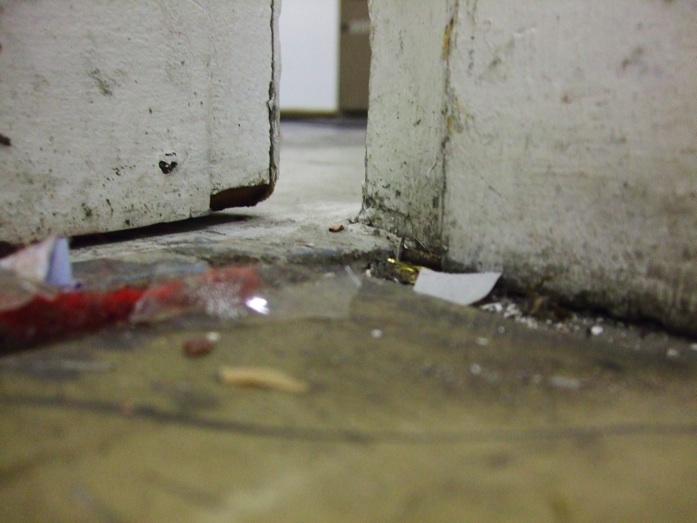 Бруд на підлозі - улюблене місце проживання личинок бліх